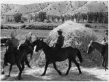 Threshing grain with horses, La Puebla, New Mexico