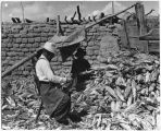 Shucking corn at Bosque in Valencia County, New Mexico, June 26, 1938