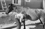 Man shoeing a horse, New Mexico