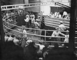 Champion Aberdeen Angus being sold at the Clovis Cattle Commission Company auction, Clovis, New...