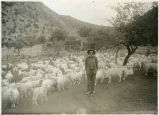 """Uncle Louis Faulkner and his goats on the Berends Creek near Lake Valley, New Mexico"""