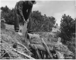 Man using log gate to regulate water flow to irrigate fields, Rio Arriba County, New Mexico