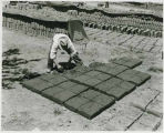 Man making adobe bricks, New Mexico