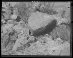 """Indian petroglyphs near Alamogordo, New Mexico. Science believes the petroglyphs were made..."