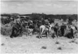 Navajo horses, stock reduction showing condition of livestock, Rock Springs, New Mexico