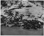 Navajo horses and burros at waterhole