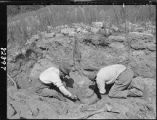 Men excavating corrugated storage jar, Otowi ruin excavation, Pajarito Plateau, New Mexico