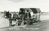 Desert prospector with mules and wagon, Las Cruces, New Mexico