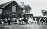 Registered Holsteins -Albuquerque Indian School
