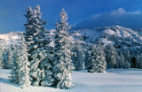 Winter Snow Scenes, N.M. High Country, Frosty Trees-Snowy Peaks