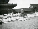 """Male lion in Forbidden City"""