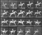 """Pandora"" Jumping a Hurdle, Saddled, Rider Nude, from the series, Animal Locomotion,..."