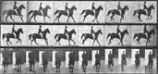 """Middleton"" Cantering, Saddled, from the series, Animal Locomotion, 1884-1886"