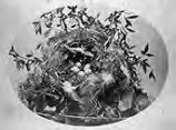 Untitled (bird's nest), from the Amateur Photographic Association Album, 1865-1870