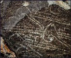 Animal and Geometric Petroglyph at Three Rivers Site