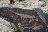 4-Legged animal petroglyph