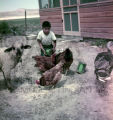 Plains American Indian child feeding animals