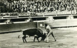 Bull fighting in Mexico