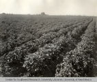Sunnyside Canal, Irrigation in Yakima Valley Album