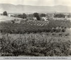 Orchards, Irrigation in Yakima Valley Album