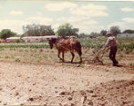 Alifas Valenzuela, traditional farming in modern times, Los Lentes, New Mexico.