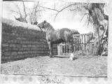 """Horse with Man  over Wall"""
