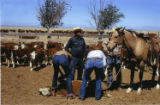 Branding Season at Cordova Ranch