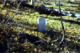 Rea gravesite, Bosque Peak, Manzano Mountains