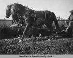 Close-up of horses pulling farm equipment