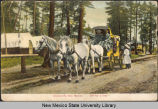 View of a horse-drawn carriage in a forested area