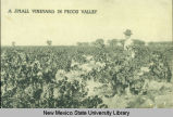 Small vineyard in Pecos Valley