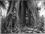 Charles F. Lummis under roots of large tree, Quirigua, Guatemala