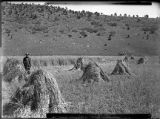 Dry farming near Las Vegas, New Mexico