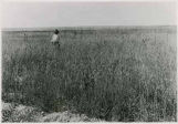 Man in wheat field, Zuni Pueblo, New Mexico