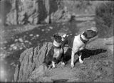 Robert P. Ervien's dogs, New Mexico