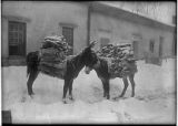 Burros loaded with firewood, courtyard of Palace of the Governors, Santa Fe, New Mexico
