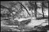 Forest scene with stream, New Mexico