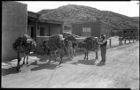 Wood vendor with burros, New Mexico