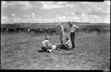 Cowboys branding cattle, New Mexico
