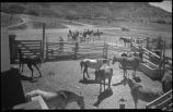 Horses in corral, Ghost Ranch near Abiquiu, New Mexico