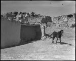 Horse near stone buildings, McCarty Village, Acoma Pueblo, New Mexico