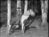 Unidentifed boy on horse, Los Alamos Ranch School, Los Alamos, New Mexico