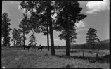 Student with pack horses near Los Alamos Ranch School, Los Alamos, New Mexico