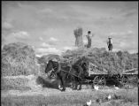 Cutting hay, New Mexico