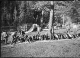 Hunting dogs in camp, New Mexico