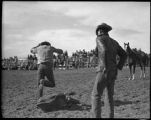 Rodeo calf roping, New Mexico