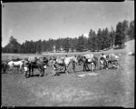 Camping trip at Los Alamos Ranch School, Los Alamos, New Mexico