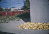 Corn and chili drying outside Pueblo home, New Mexico