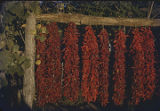 Drying chili ristras, New Mexico