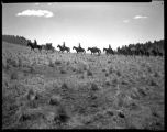 Los Alamos Ranch School students with horse pack train near Los Alamos, New Mexico